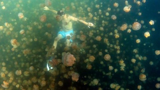 Lake Once Filled With Millions of Jellyfish Re-Opens to Public