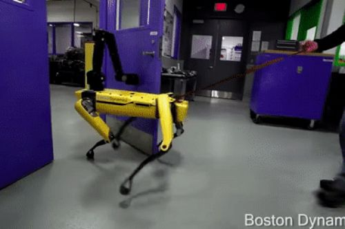 Only a fool would dare interrupt Boston Dynamics' SpotMini from opening a door