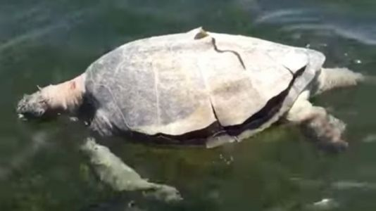Sea Turtle With Spear Through Head Found in Florida National Park