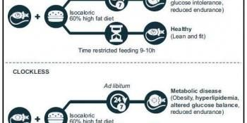 Time-Restricted Feeding Can Override Circadian Clock Disruption