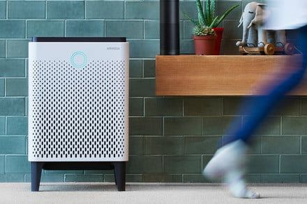 Breathe clean air with the 10 best air purifiers for allergies