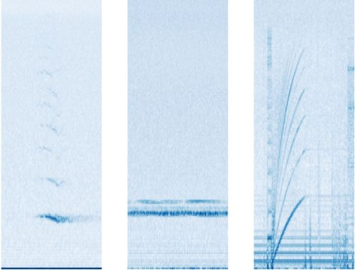 Google AI listens to 15 years of sea-bottom recordings for hidden whale songs