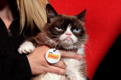 Grumpy Cat has died, and the internet isn't taking it well