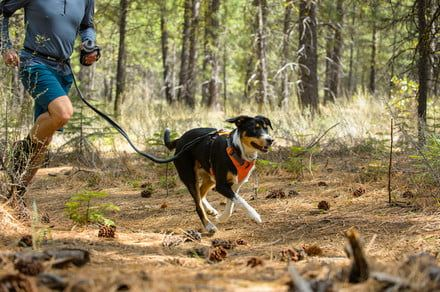 Get your pup trail-ready with this essential hiking gear for dogs
