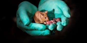 Mouse Pups With Same-Sex Parents Born in China Using Stem Cells and Gene Editing