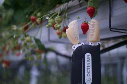 Octinion's strawberry-picking bot is quick, nimble, and ready to replace humans
