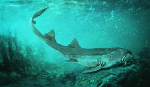 Prehistoric Shark Species With 'Spaceship-Shaped' Teeth Discovered, Named After Arcade Game