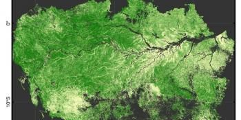 Researchers Find Human Impact on Forest Still Evident After 500 Years