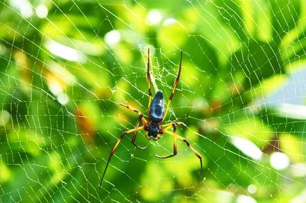 Spider silk could be used to create artificial skin to help heal wounds