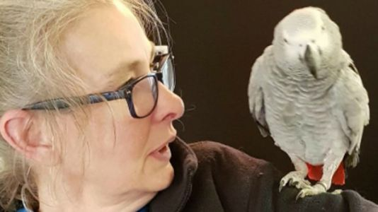 Parrot 'Falls in Love' With Amazon Alexa, Uses It to Order Treats