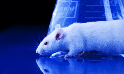 China's mind-controlled cyborg rats are proof we live in a cyberpunk dystopia