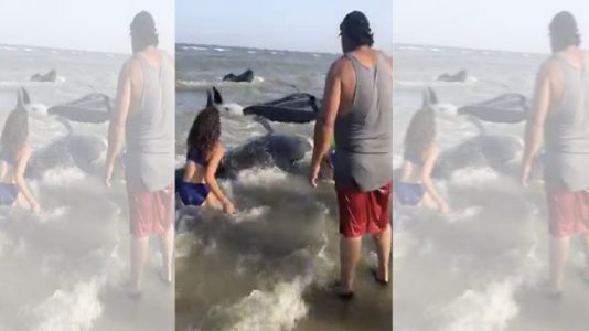 Watch: Beachgoers Rescue Dozens of Stranded Pilot Whales in Georgia