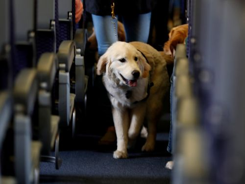 An emotional support dog bit a six-year-old girl on a Southwest Airlines flight - and some people are blaming the child
