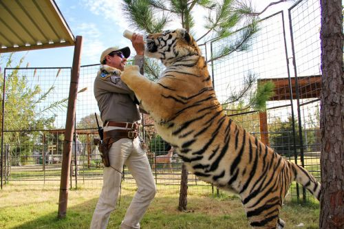 Tiger King is a viral success because Netflix rules the jungle
