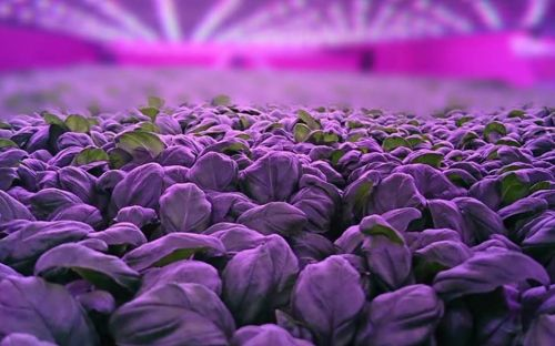 Scotland's first vertical farm gets£5.4m funding boost