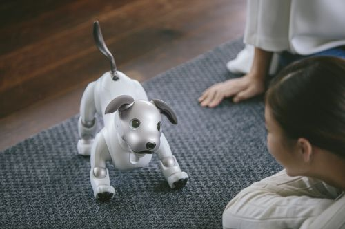 Sony's robot puppy Aibo is looking for a home