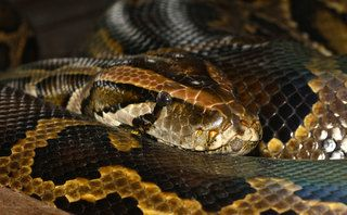 GitHub launches security alerts for Python