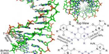 Synthetic Molecule Invades Double-Stranded DNA
