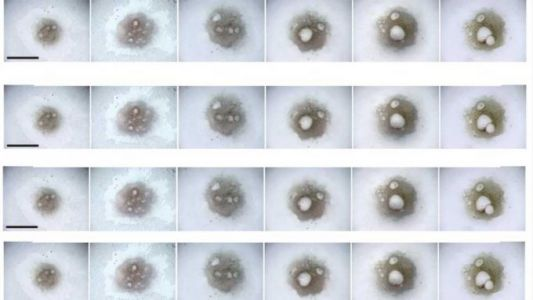Japanese scientists turn blood cells into human egg cells