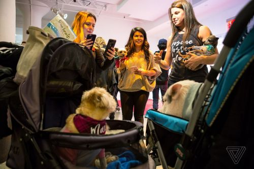 At PetCon, Instagram-famous dogs meet their adoring fans