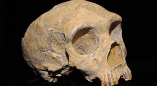 Scientists Identify Genes from 'Ghost Population' of Ancient Humans