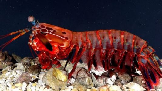 Self-Driving Vehicle Camera Tech Inspired by Shrimp Eyes