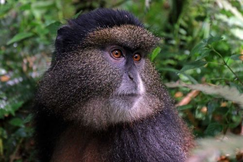 Facial recognition may help save endangered primates