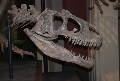 The T Rex's tiny baby arms might have been way more useful than they seem