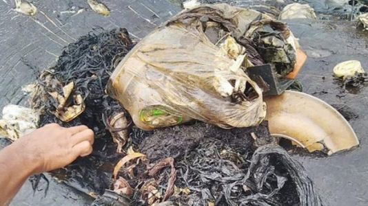 Dead Whale With 1,000 Pieces of Plastic in Stomach Found in Indonesia