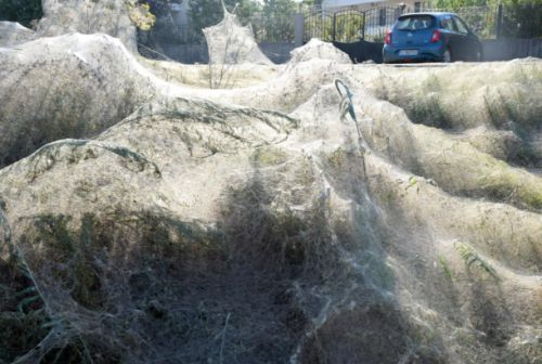 An army of spiders is slowly taking over a Greek town, but it's totally fine