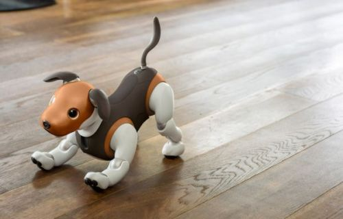 Sony aibo chocolate edition arrives as robot pup turns guard dog