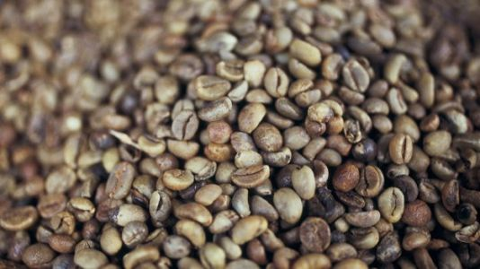 The World's Most Popular Coffee Species Are Going Extinct, Study Says