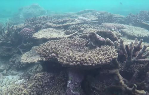 Letting coral reefs die will actually cost us more than saving them