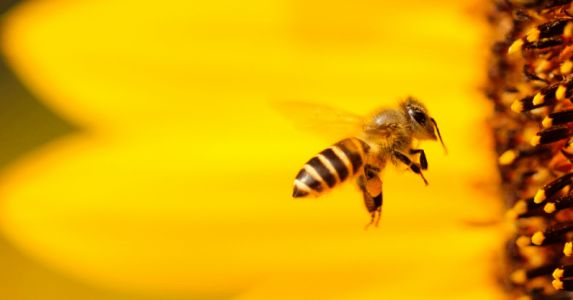We have to save the bees, here's how we can do it