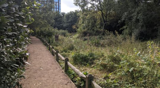 Camley Street's natural park has reopened to the public