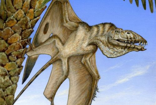 The oldest flying reptile ever discovered was just found in Utah