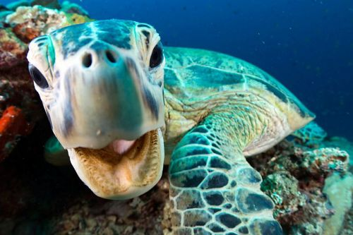 Watch Blue Planet II this weekend along with scientists on Twitter