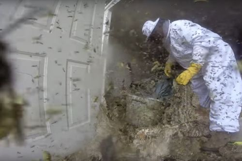 This man wading into a huge wasps' nest captures the spirit of Black Friday