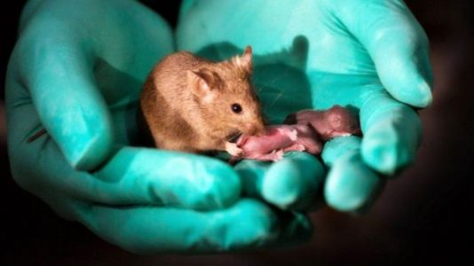 Researchers Produce Healthy Babies From Same-Sex Mice