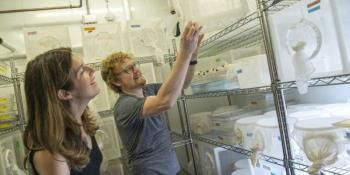 Mosquito Genome Opens New Avenues For Reducing Bug-Borne Disease