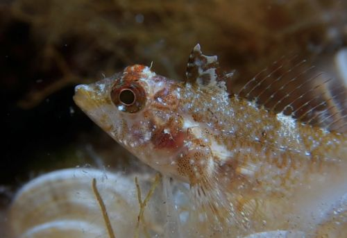 Bizarre deep-sea fish can turn its eyes into multi-color flashlights