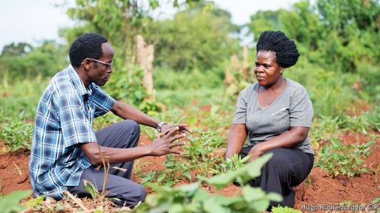 Improving the plants that Africans eat and breeders neglect