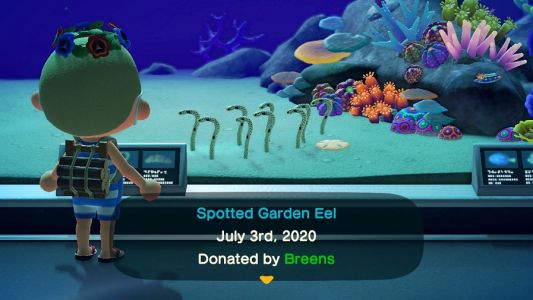 Full list of EVERY sea creature in Animal Crossing: New Horizons
