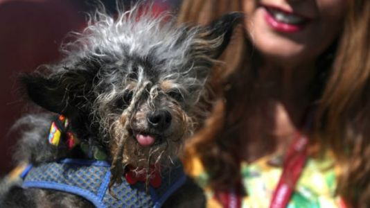 Scamp the Tramp Wins 'World's Ugliest Dog' Contest