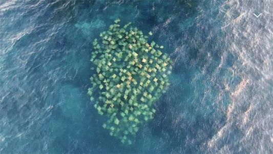 Watch: Amazing Drone Footage Captures School of Stingrays in Australia